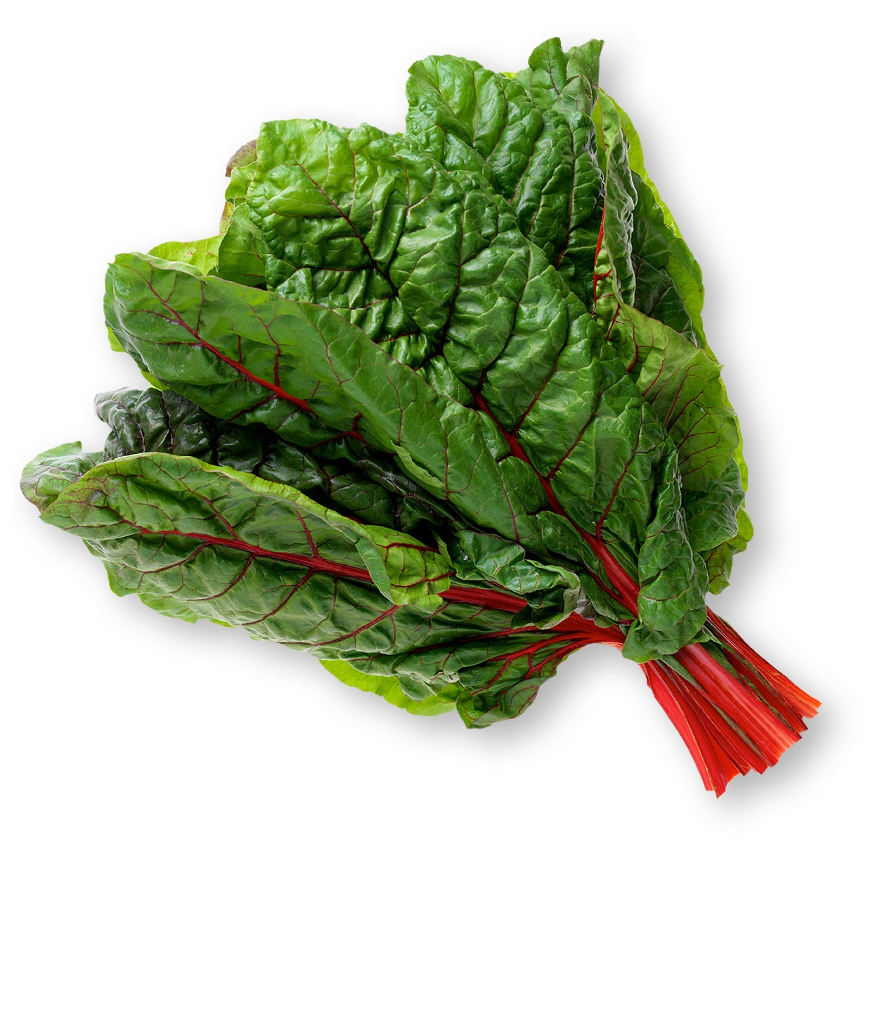 a bunch of red chard - green leaves with red stems