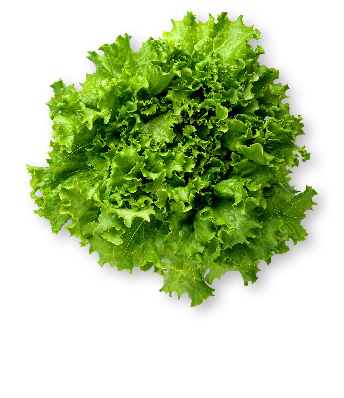 photo of green leaf lettuce