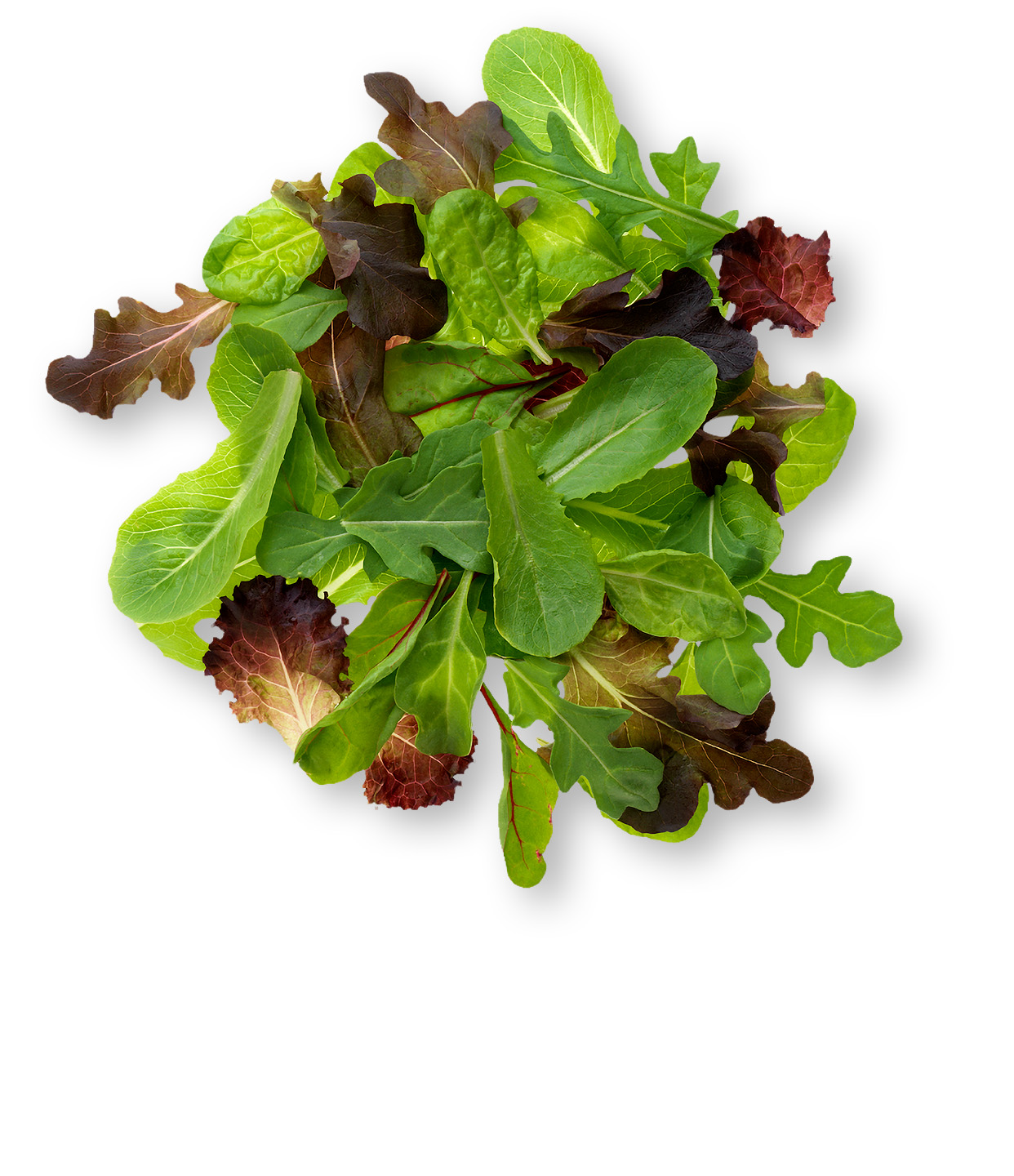 photo of spring mix salad